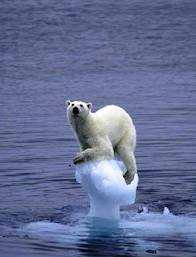 beruangberuzlahdiseketulaisdikutubutara
