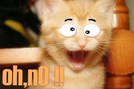 kucing terkejut