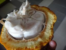 buahkokolahbang
