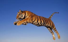 ninja dapat lompat macam ni?