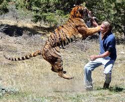 harimaulah