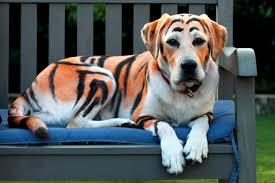 Binatang aneh yang ditemui oleh seorang saintis yang menamakannya sebagai harimaunjing??!!